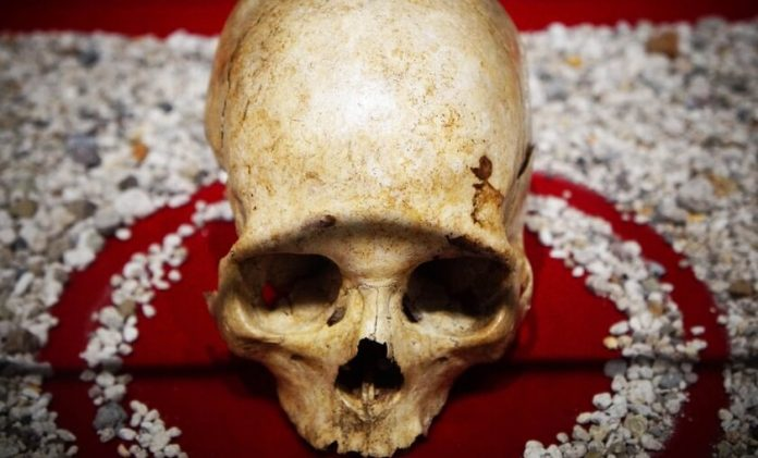 Antropología. El origen y la evolucion del ser humano