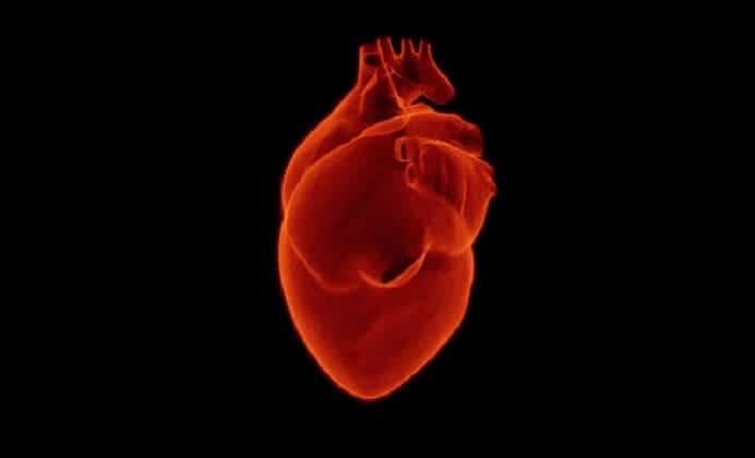 humanos e infartos